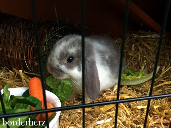 kaninchen-sunny