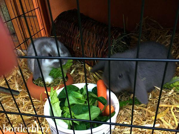 Sunny & Flammy im neuen zu Hause