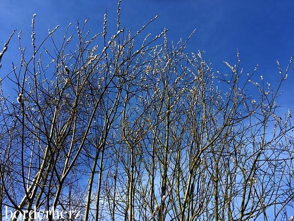 Frühling im Landschaftspark Duisburg Nord
