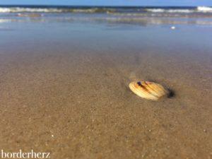 Muscheln am Strand von Wenningstedt