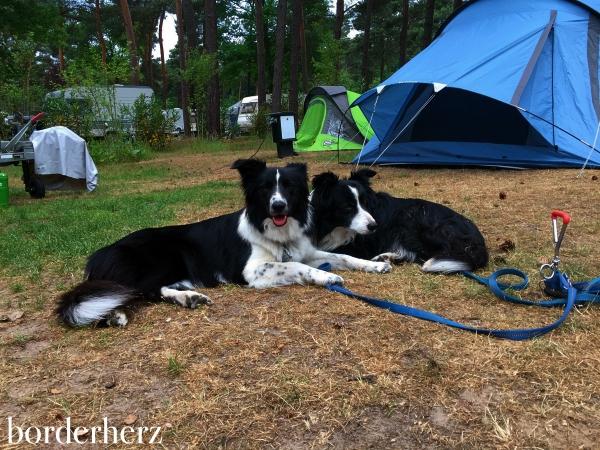 Camping Heldense Bossen