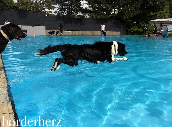 Hundeschwimmen Vonderort
