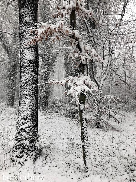 Natur im Schnee