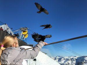 Dohlen am Nebelhorn