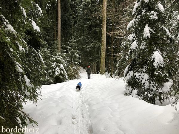 Schneewandern Scheidegg