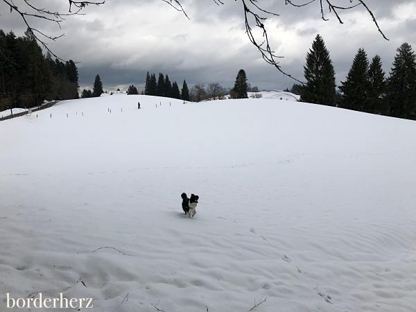 Winterwonderland Scheidegg
