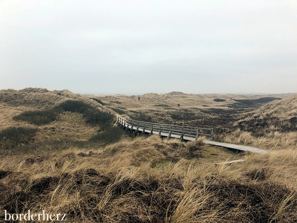 Amrum Dünen