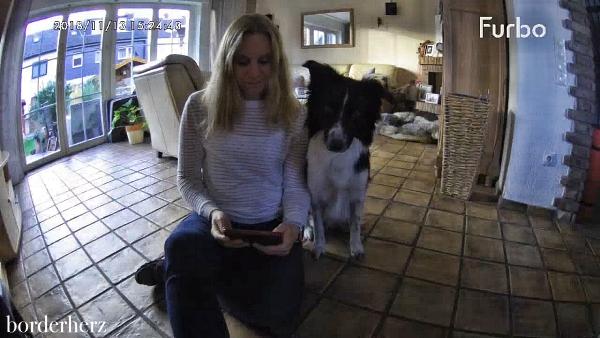 Überwachungskamera Hund