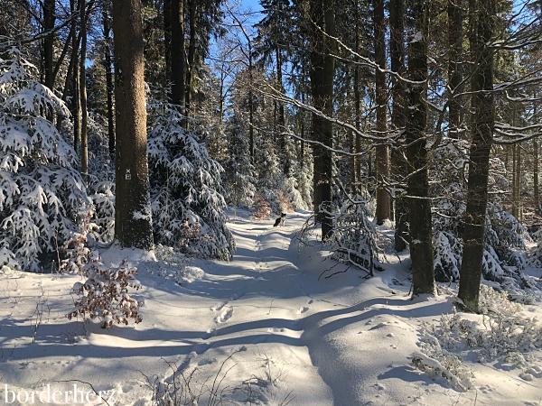 Wenige Schneespuren