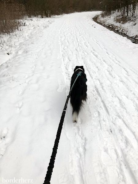 Canicross im Schnee