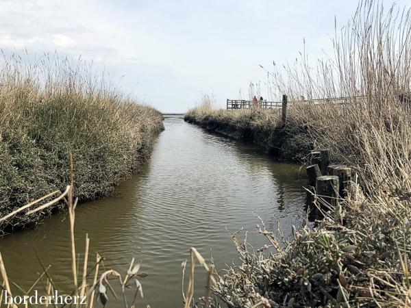 Amrum Wattenmeer