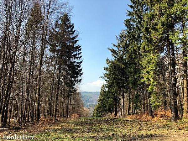 Waldschneise mit Ausblick