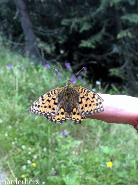 Schmetterling Osttirol