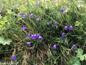 Osttirol Flora