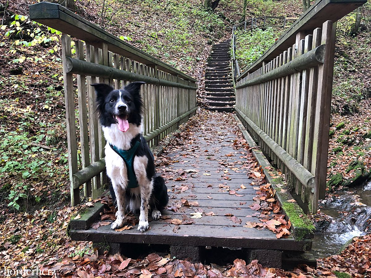 Schluchten- und Brückenpfad