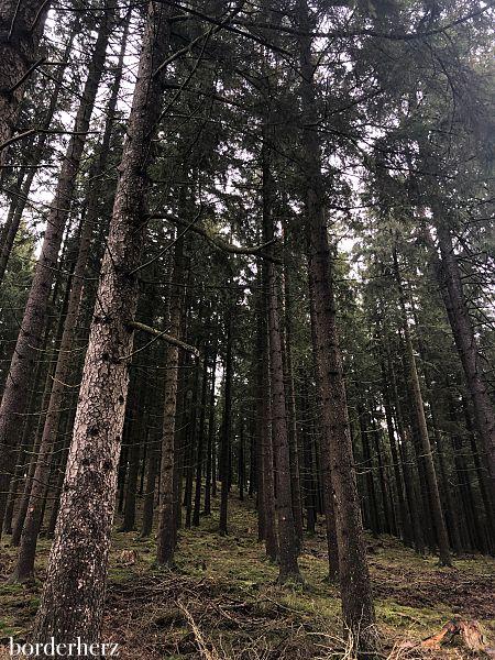 Eifelschleife Naturwanderpfad