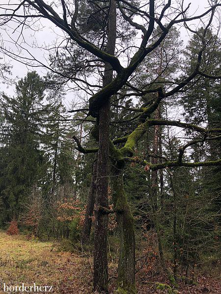Liebende Bäume