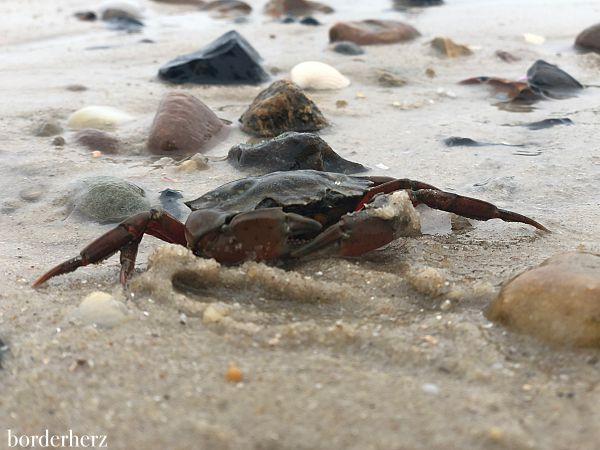 Strandfund Sylt