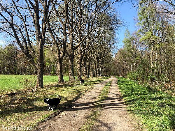 Wandern mit Hund am Niederrhein