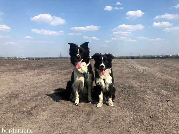 Wandern mit Hund im Ruhrgebiet