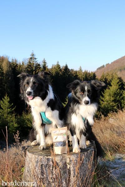 CBD Produkte für Hunde