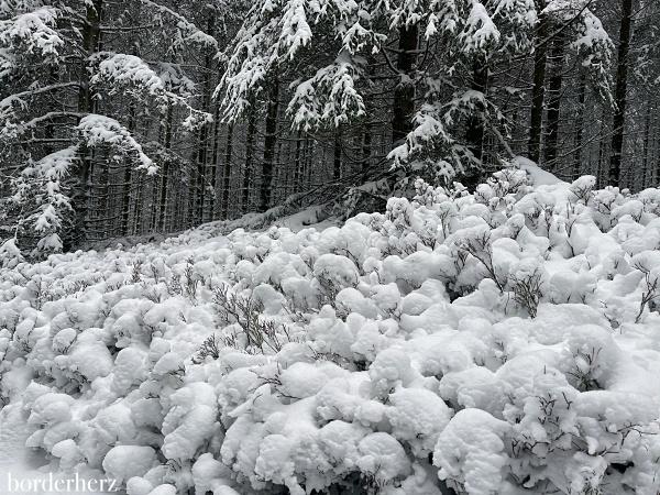 Winterwandern Bödefeld