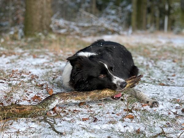 Wandern mit Hund Sauerland