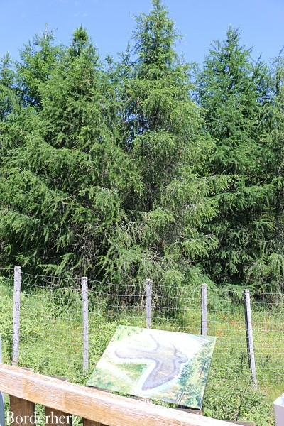 Waldskulpturenpfad