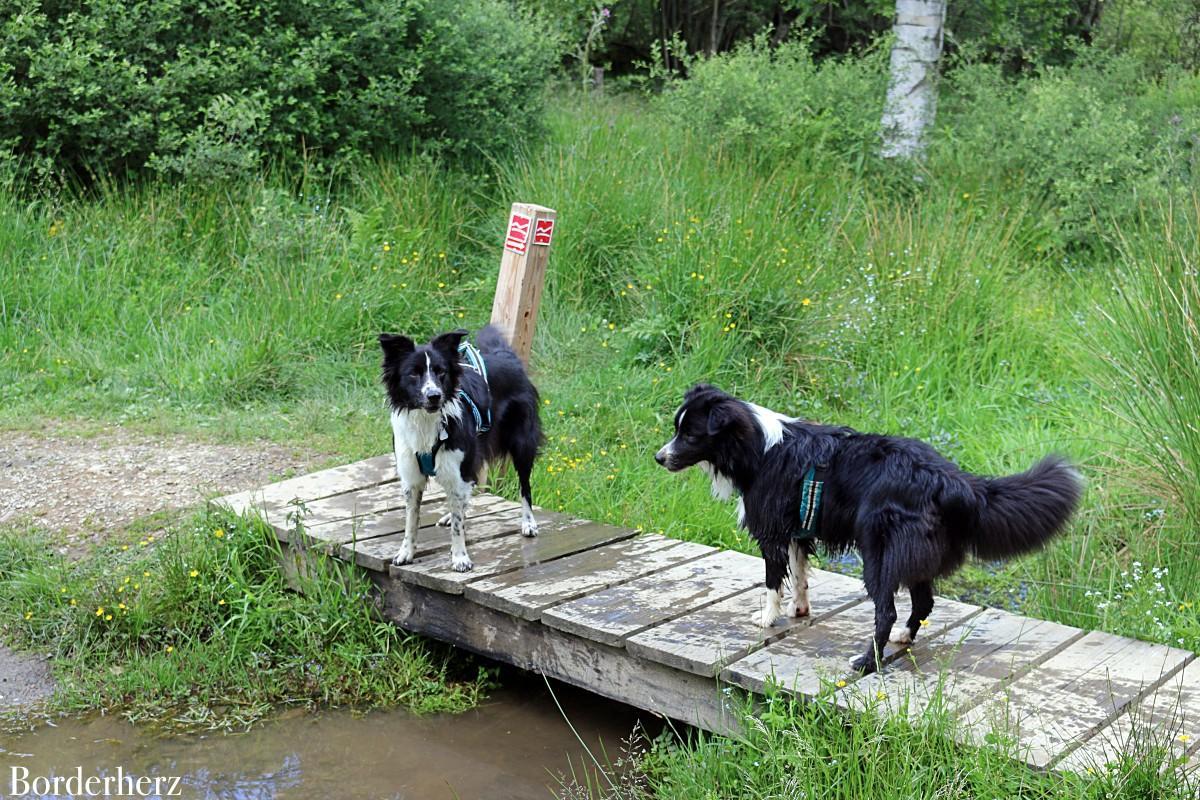 wandern im Sauerland mit Hund